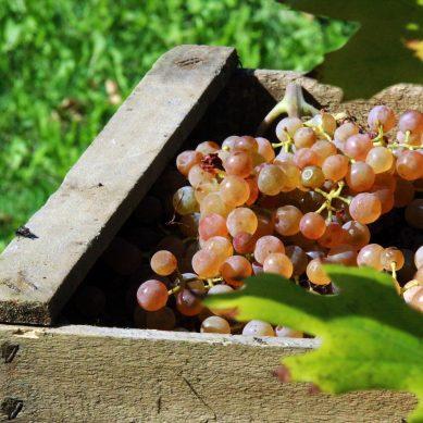 Több mint 100 programlehetőséget kínál az őszi Nyitott Balaton