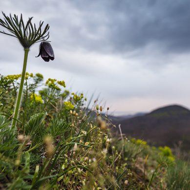 A Tóti-hegy virágai